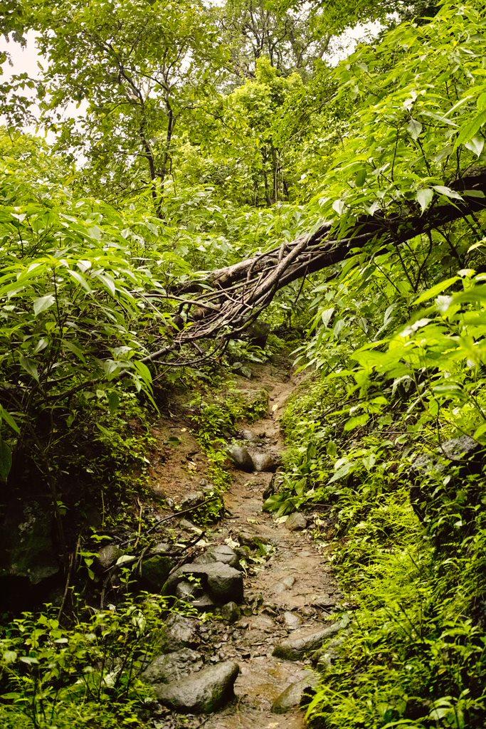 Trail through the forest - Khandas to Bhimashankar via Ganesh Ghat